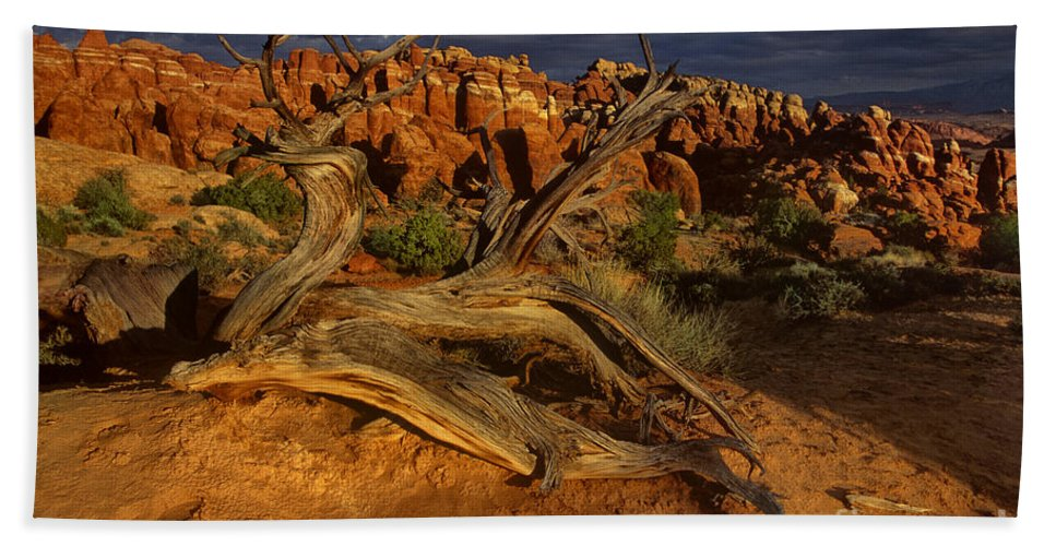 North America Bath Sheet featuring the photograph Juniper Below The Fiery Furnace Arches National Park by Dave Welling