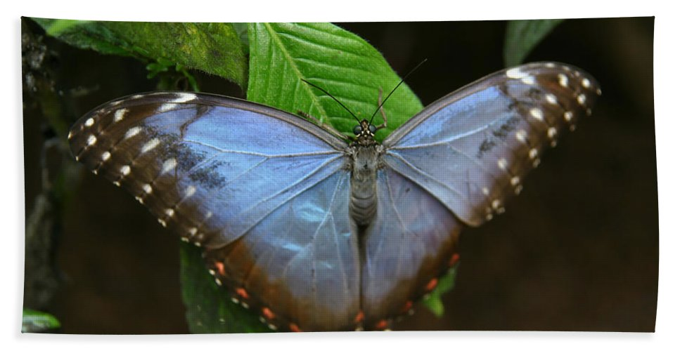 Just Hanging On Hand Towel featuring the photograph Just Hanging On by Denyse Duhaime