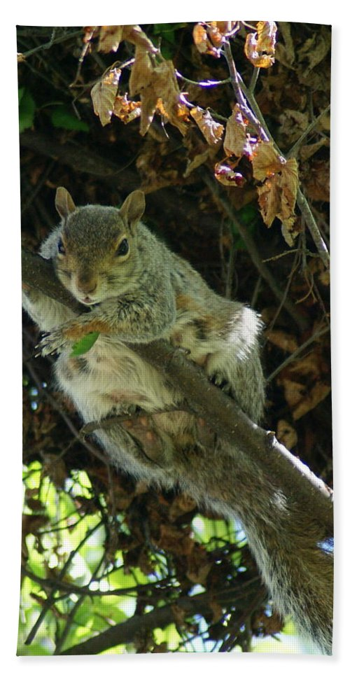 Squirrels Bath Sheet featuring the photograph Just Hanging Out Near Home by Ben Upham III