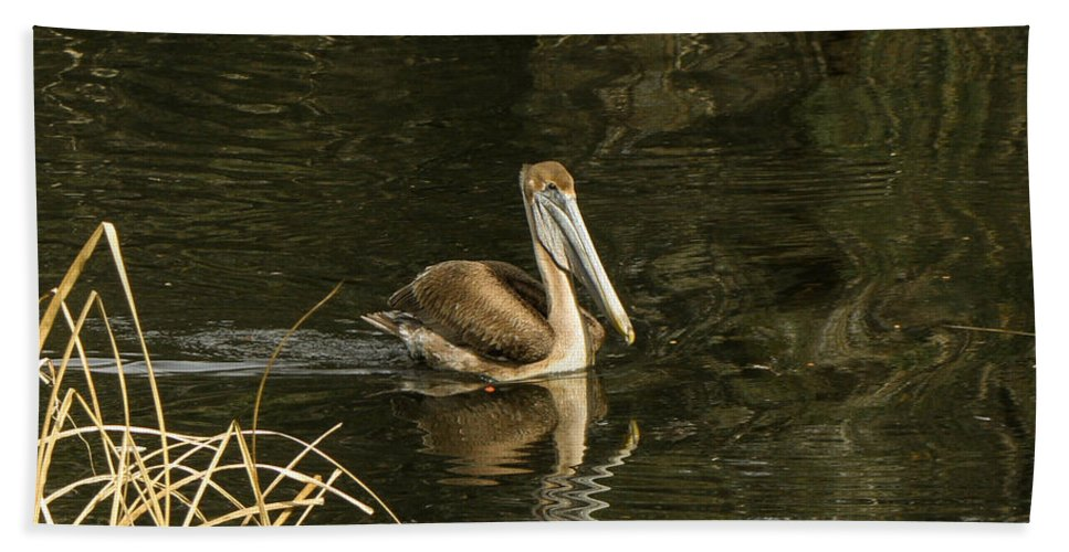 Pelican Hand Towel featuring the photograph Just Passing Through by Mechala Matthews