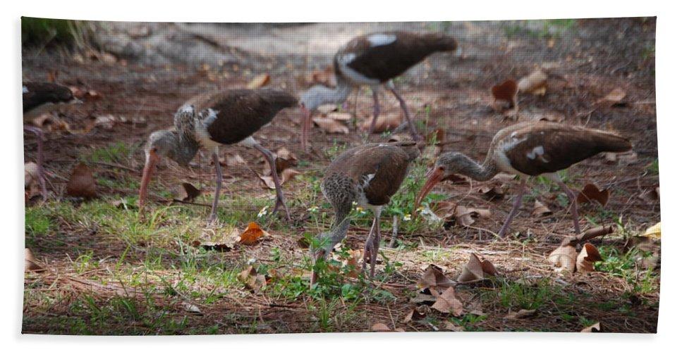 Suncoast Exterminator Hand Towel featuring the photograph Juvenile Ibis by Robert Floyd
