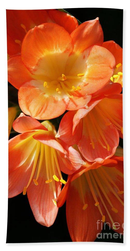 Kaffir Lily Hand Towel featuring the photograph Kaffir Lily by Judy Whitton