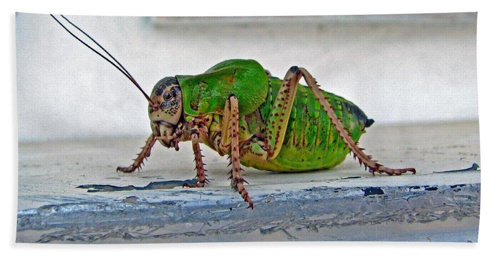 Bush Crickets Hand Towel featuring the photograph Katydid by Taiche Acrylic Art