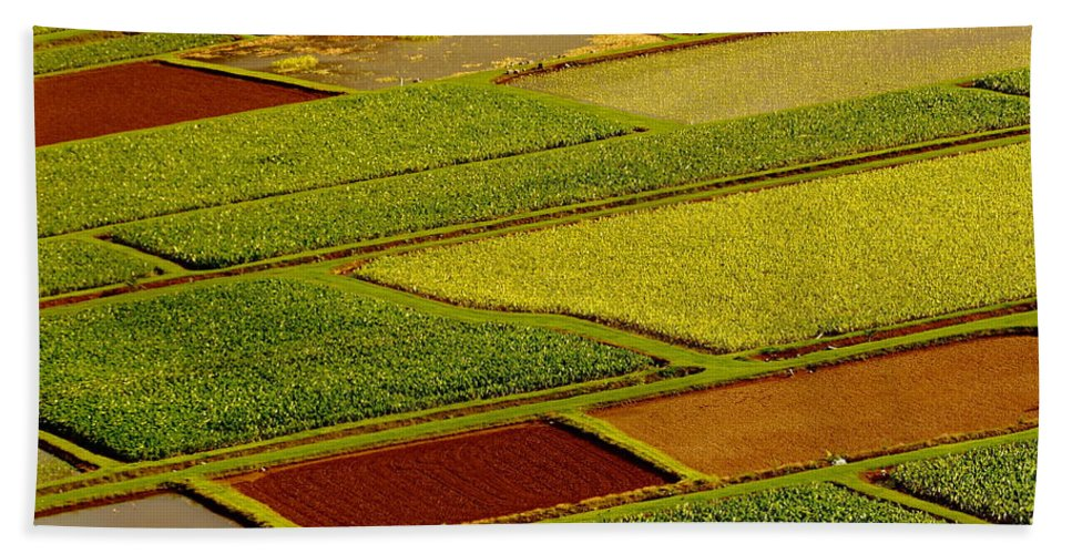 Taro Fields Bath Sheet featuring the photograph Kauai Taro Fields by Richard Cheski