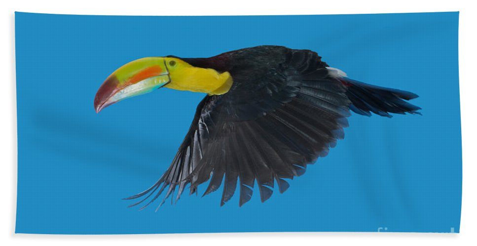 Animal Hand Towel featuring the photograph Keel-billed Toucan by Anthony Mercieca