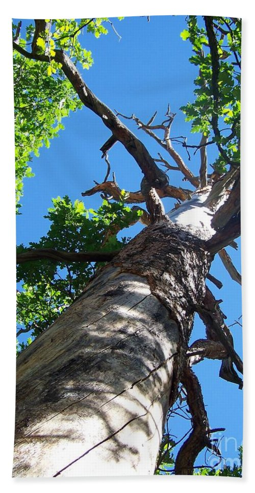Trees Bath Sheet featuring the photograph Keep Looking Up by Jewell McChesney