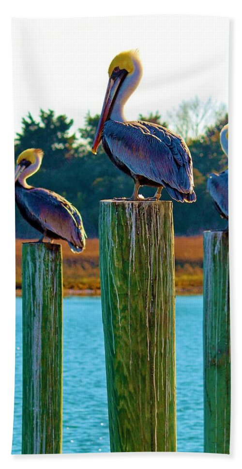 Pelican Hand Towel featuring the photograph Keeping Watch by Cynthia Guinn