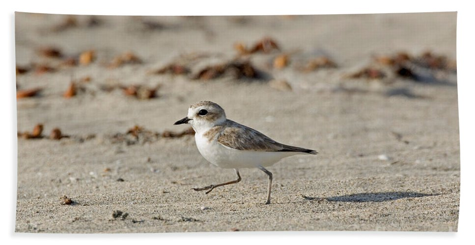 Fauna Hand Towel featuring the photograph Kentish Plover by Anthony Mercieca