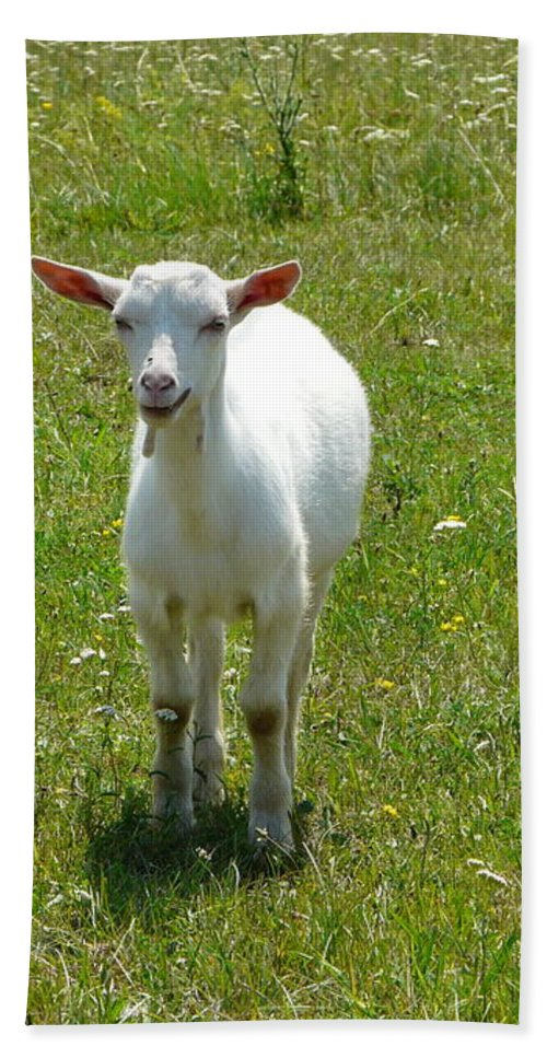 Kid Hand Towel featuring the photograph Kid Goat by Valerie Ornstein