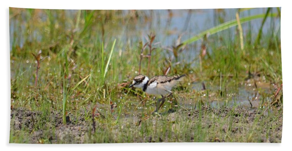 Killdeer Hatchling Bath Sheet featuring the photograph Killdeer Hatchling by Maria Urso