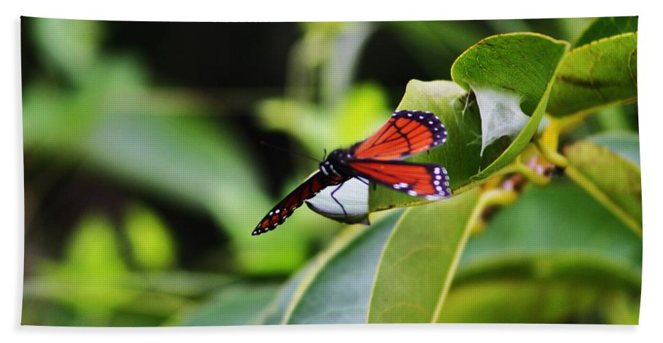 Monarch Hand Towel featuring the photograph King Of The Butterflies by Chuck Hicks