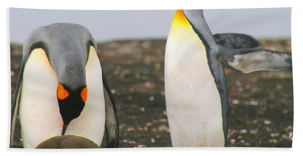 Aptenodytes Patagonicus Bath Sheet featuring the photograph King Penguins With Chick And Egg by Laurel Talabere