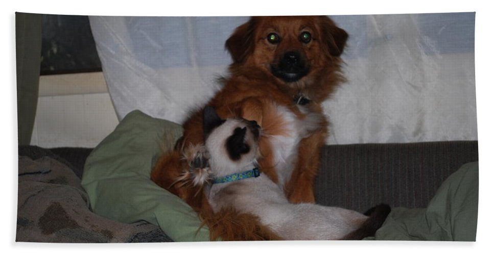 Ninja Cuddled Up To Lady. Cat Dog Hand Towel featuring the photograph Kiss Me Quick by Robert Floyd