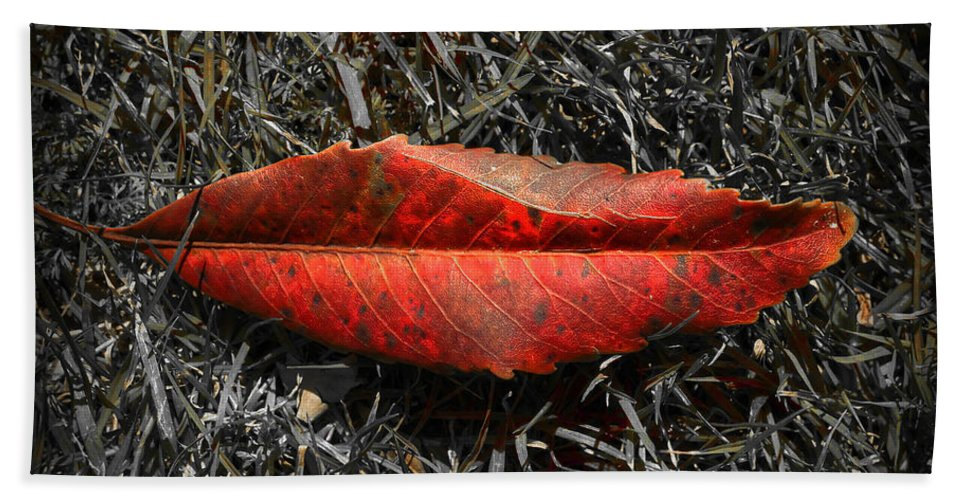 Leaf Hand Towel featuring the photograph Kiss Of Leaf by Wayne Sherriff