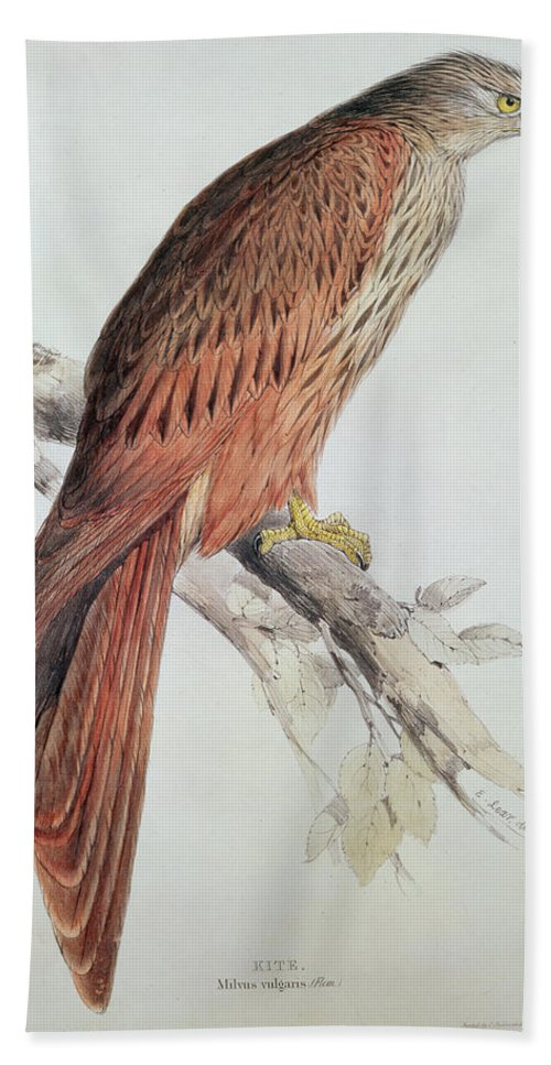 Birds Bath Sheet featuring the painting Kite by Edward Lear