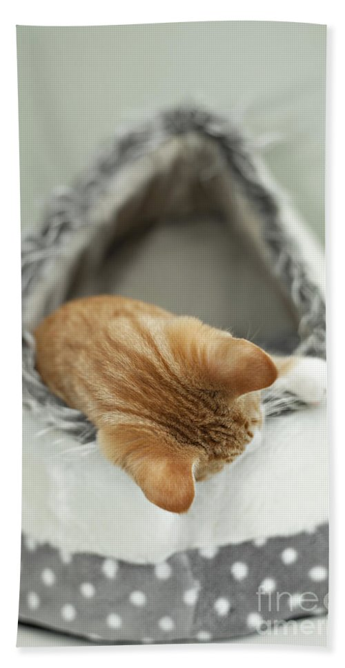 Kitten Bath Sheet featuring the photograph Kitten In An Igloo by Sophie McAulay