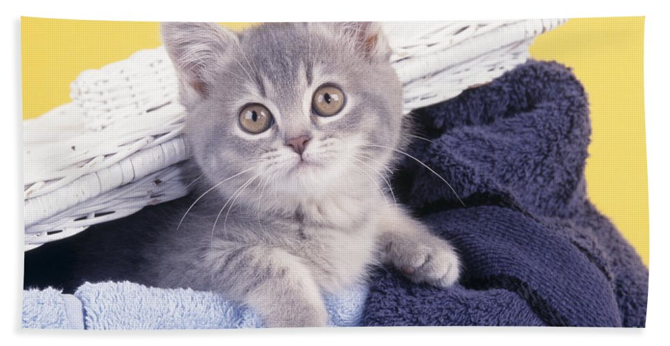 Cat Hand Towel featuring the photograph Kitten In Laundry by John Daniels
