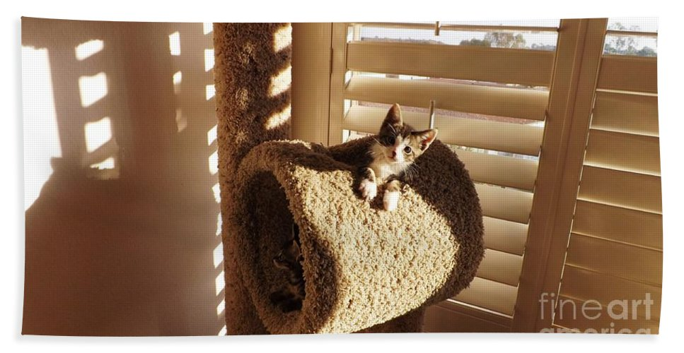 Kittens Hand Towel featuring the photograph Kitten Peeks Through Hole In Condo by Jussta Jussta