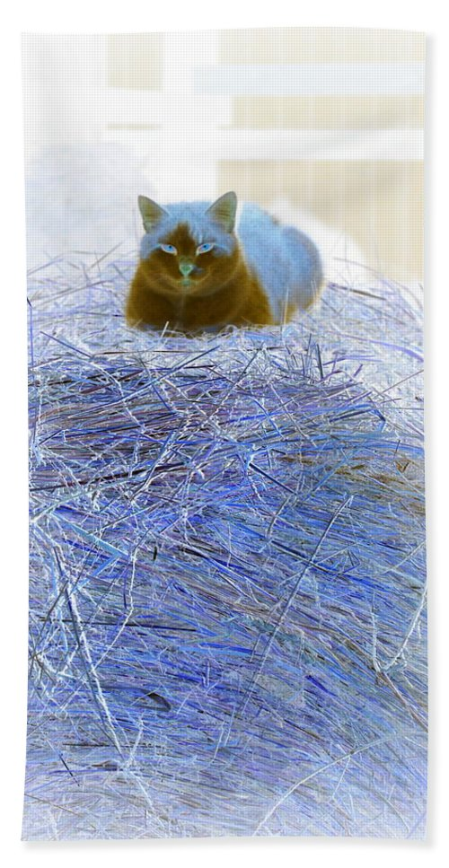 Cat Bath Sheet featuring the photograph Kitty Blue IIi by Kathy Sampson