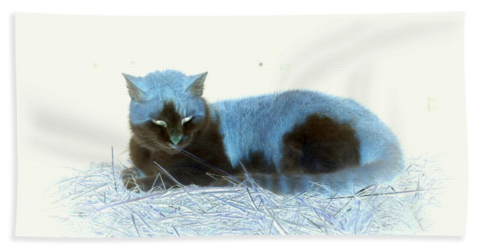 Cat Bath Sheet featuring the photograph Kitty Blue IIII by Kathy Sampson