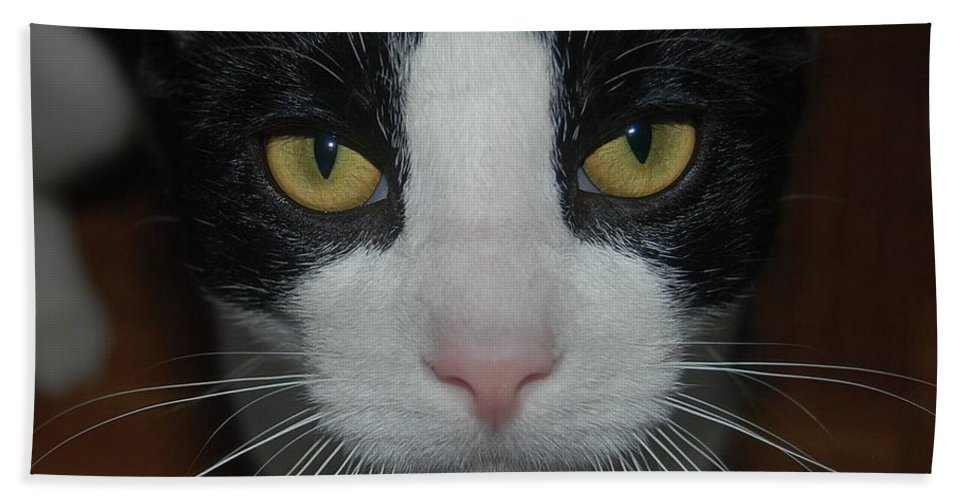 Cat Bath Sheet featuring the photograph Kitty Cat by Philip Ralley