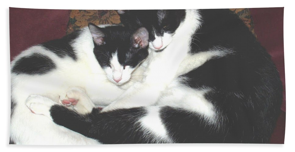 Brothers Bath Sheet featuring the photograph Kitty Love by Marna Edwards Flavell