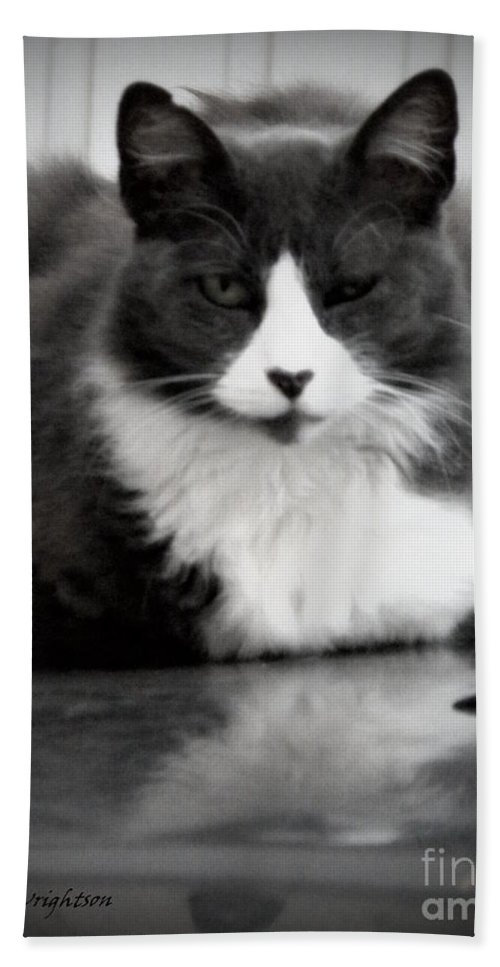 Cat Bath Sheet featuring the photograph Kitty On A Car by Lainie Wrightson