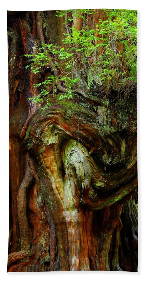 Cedar Tree Bath Sheet featuring the photograph Knot On A Giant by Jeanette C Landstrom