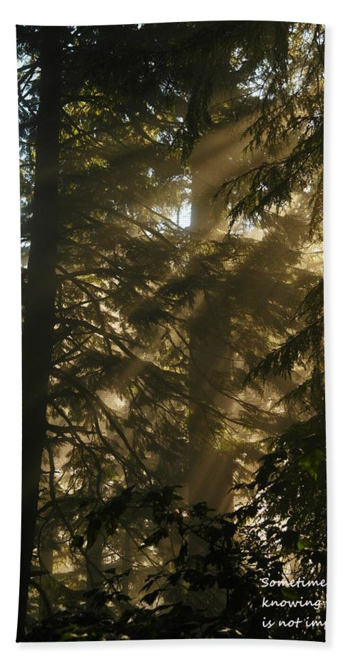 Trees Hand Towel featuring the photograph Knowing The Way by Jeff Swan