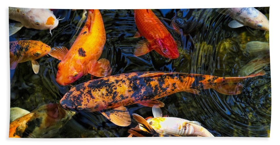 Cyprinus Carpio Haematopterus Bath Sheet featuring the photograph Koi Magic by Kathy Clark