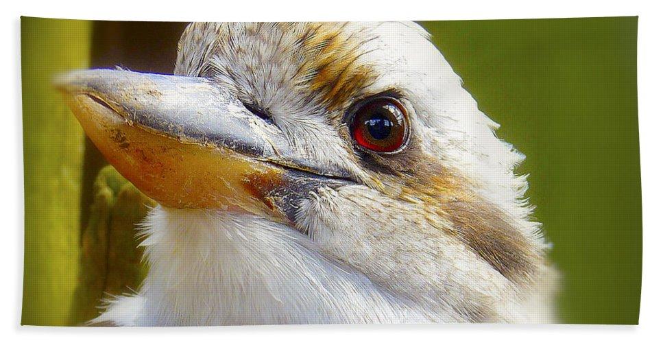 Beak Hand Towel featuring the photograph Kokaburra by Ingrid Smith-Johnsen
