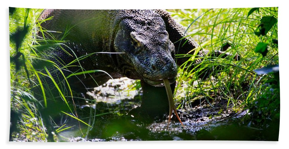 Indonesia Hand Towel featuring the photograph Komodo Island 1 by David Beebe