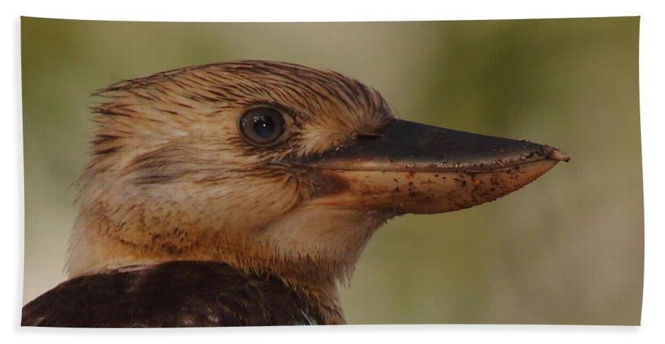 Kookaburra Hand Towel featuring the photograph Kookaburra Portrait by Bruce J Robinson