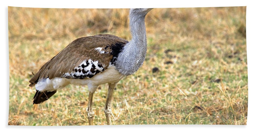 Africa Hand Towel featuring the photograph Kori Bustard by Timothy Hacker
