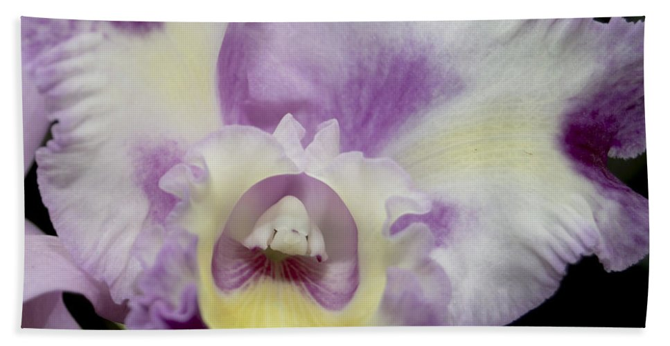 Orchid Hand Towel featuring the photograph Kristi Leigh by Terri Winkler