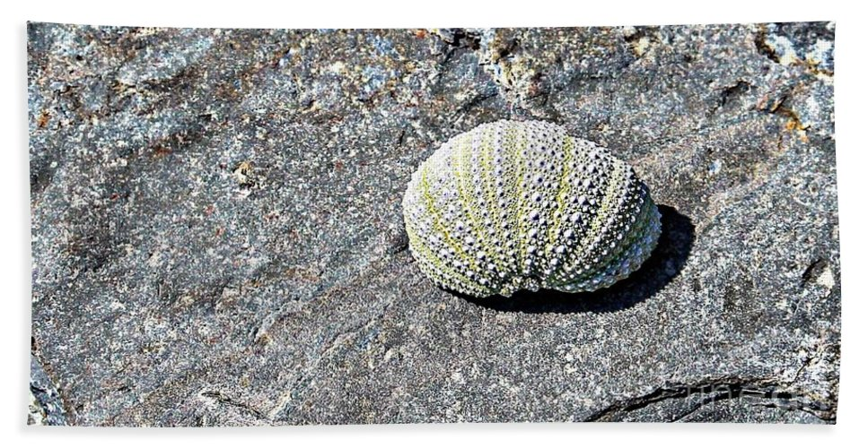 Lacy Shell On A Beachrock Hand Towel featuring the photograph Lacy Shell On A Beachrock by Barbara Griffin