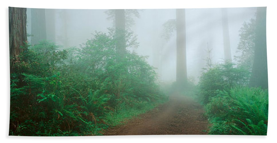 Photography Hand Towel featuring the photograph Lady Bird Johnson Grove, California by Panoramic Images