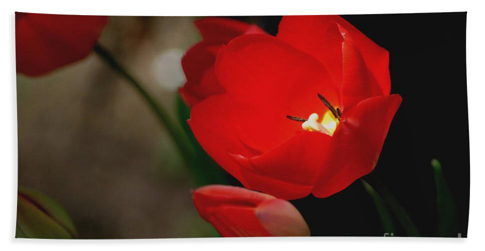 Tulips Bath Sheet featuring the photograph Lady In Red by Living Color Photography Lorraine Lynch