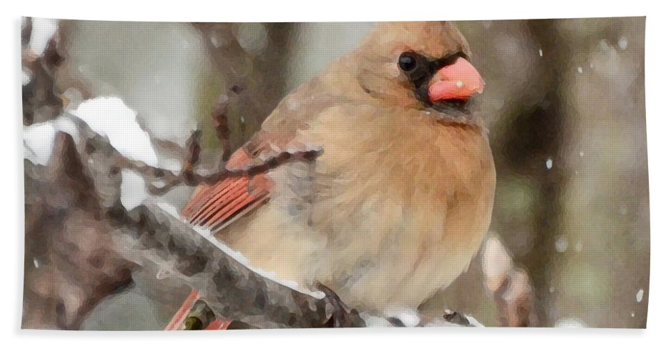 Female Cardinal Bath Sheet featuring the photograph Lady In The Snow by Kerri Farley