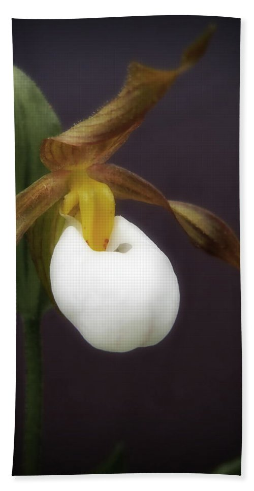 Flower Bath Sheet featuring the photograph Lady Slipper by Jamie Johnson