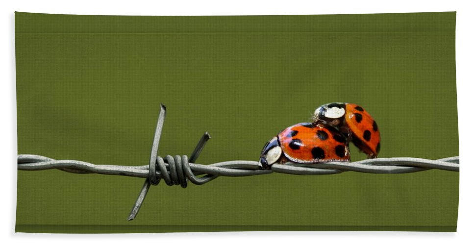 Beetle Bath Sheet featuring the photograph Ladybug In Love by Heike Hultsch