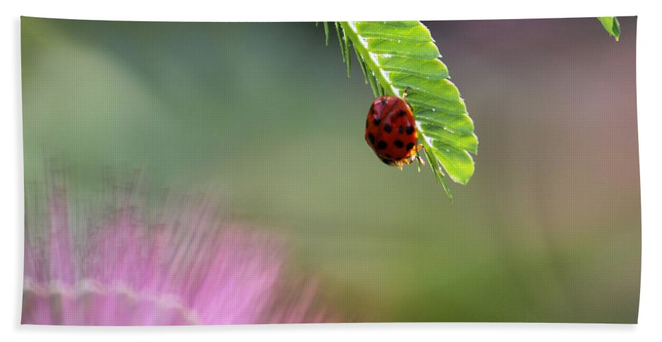 Macro Bath Sheet featuring the photograph Ladybug With Mimosa by Jason Politte