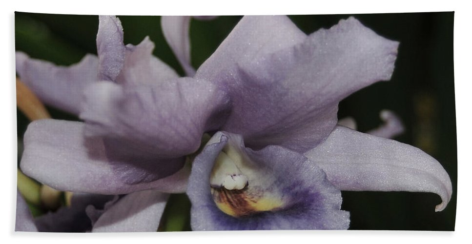 Orchid Bath Sheet featuring the photograph Laeliocattleya Blue Boy 2 Of 2 by Terri Winkler