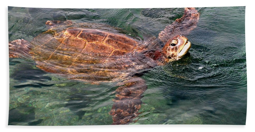 Florida Hand Towel featuring the photograph Lager Head Turtle 001 by Larry Ward