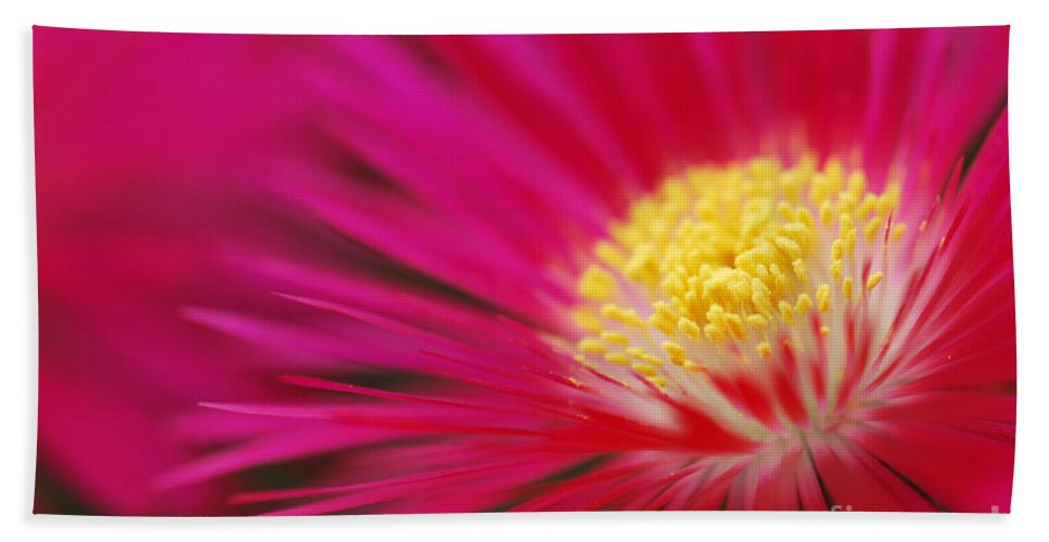Lampranthus Hand Towel featuring the photograph Lampranthus Abstract by Grigorios Moraitis