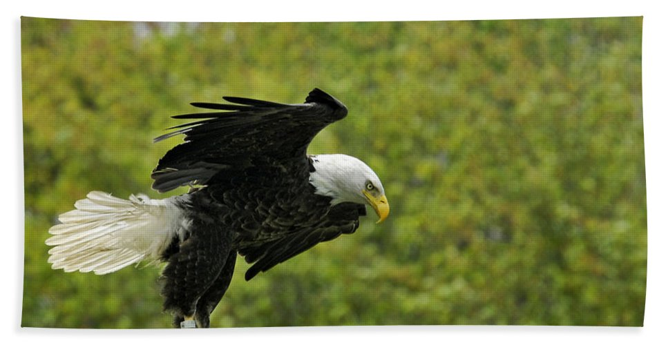 Eagles Hand Towel featuring the photograph Landing Gear Down by Claudia Kuhn