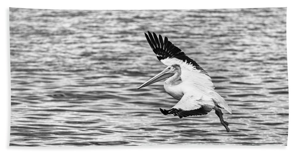 White Pelican Hand Towel featuring the photograph Landing Pelican In Black And White by Thomas Young