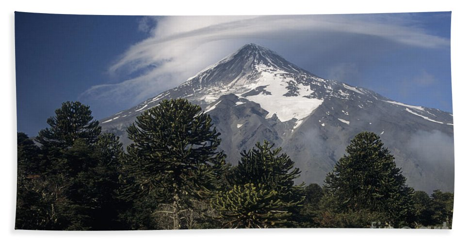 Argentina Hand Towel featuring the photograph Lanin Volcano And Araucaria Trees by James Brunker