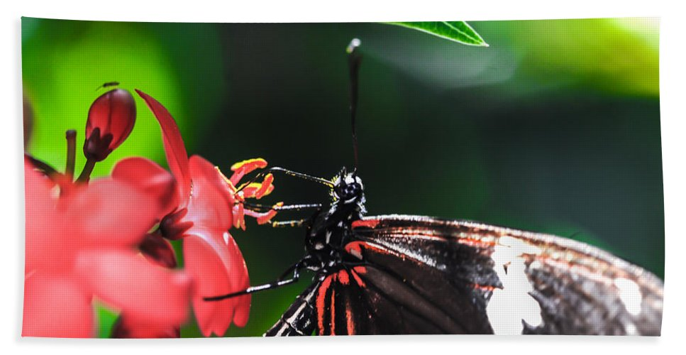 Optical Playground By Mp Ray Bath Sheet featuring the photograph Laparus Doris Butterfly by Optical Playground By MP Ray