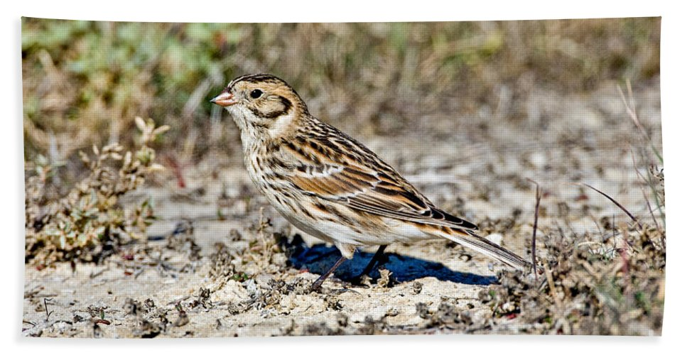 Animal Hand Towel featuring the photograph Lapland Longspur by Anthony Mercieca